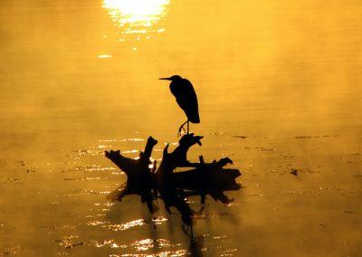 Crane-sunset-silhouette